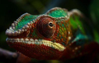 powerevents, adopcja kameleona lamparciego, kameleon lamparci, event, kameleon, wrocławskie zoo, zoo we wrocławiu